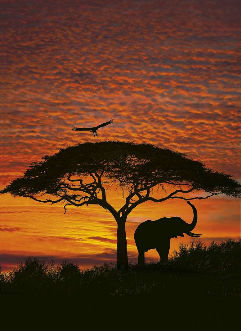 Afrikai szavanna fali poszter
