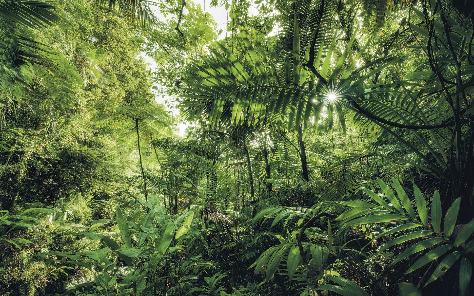 Dél-Amerikai buja dzsungel fali poszter
