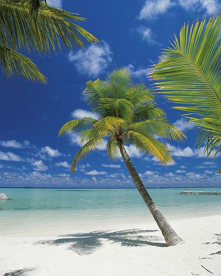 Dél tengeri paradicsom fali poszter