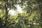 Dzsungel mintás fali poszter