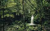El Yunque esőerdő fali poszter