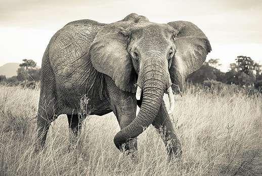 Elefánt mintás fali poszter