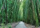 Fali poszter bambusz mintával