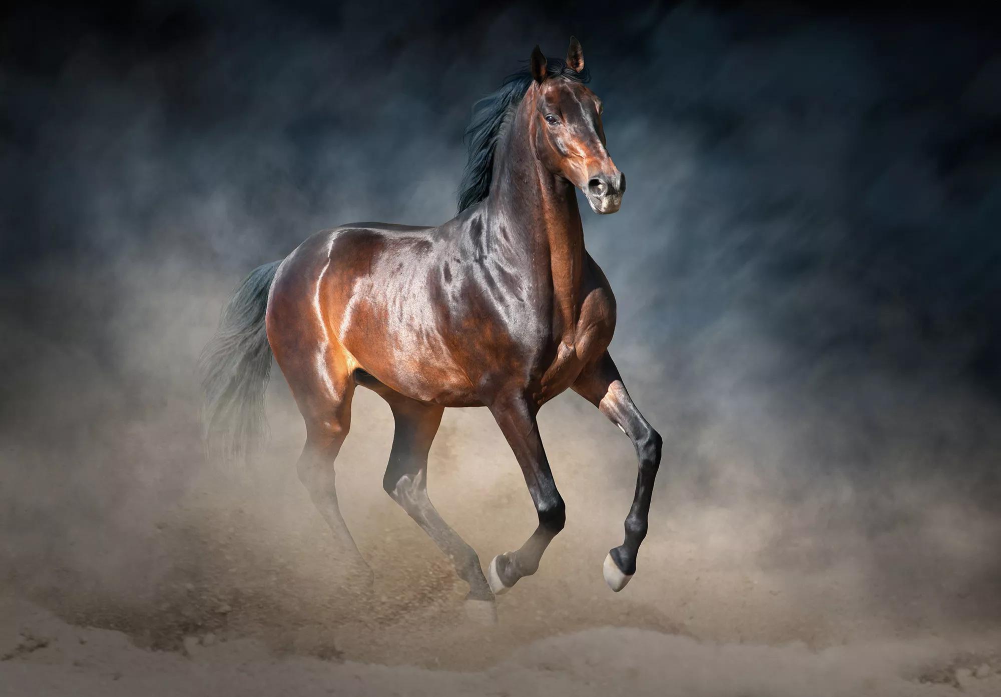 Fali poszter barna ló mintával