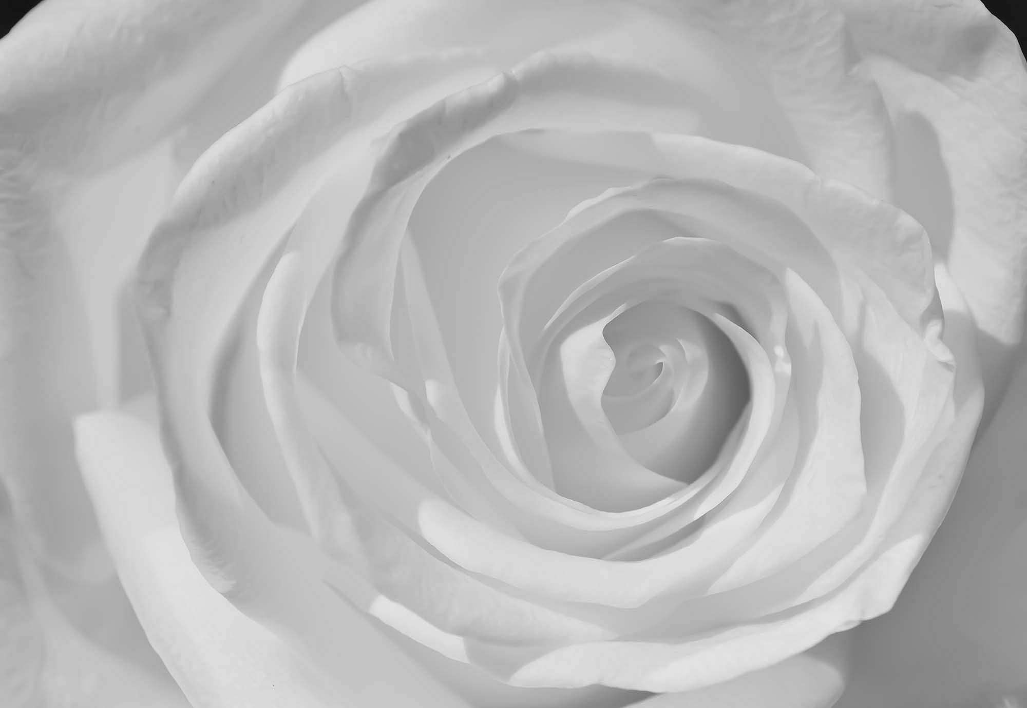 Fali poszter fehér rózsa mintával