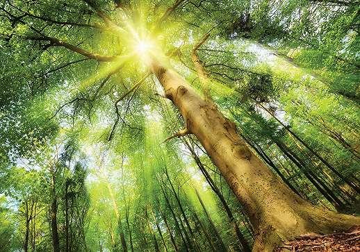 Fali poszter napfényes erdei táj mintával
