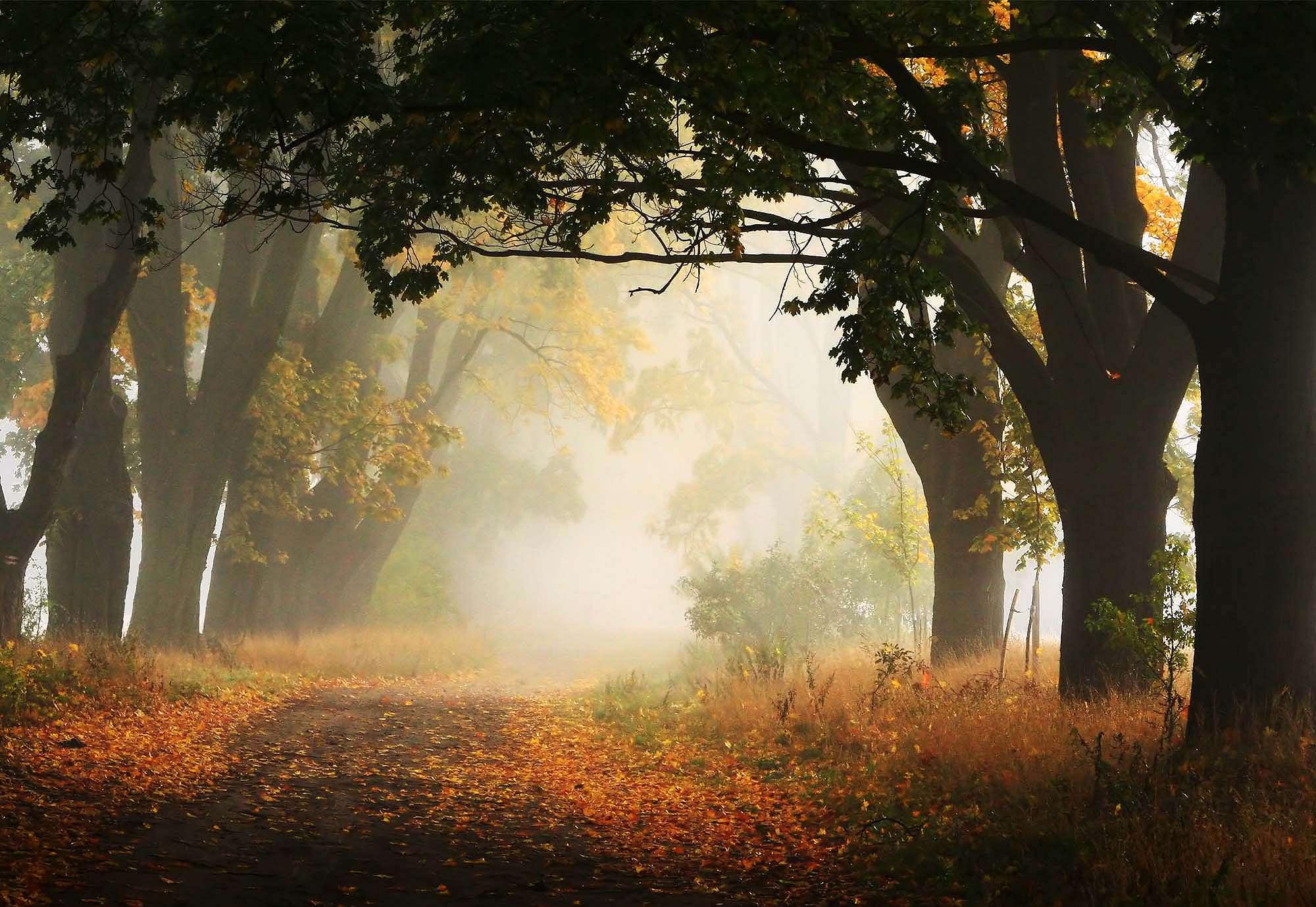 Fali poszter őszi hangulat egy lengyel erdőben