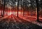 Fali poszter romantikus hangulatú erdei tájjal fantsztikus naplementével