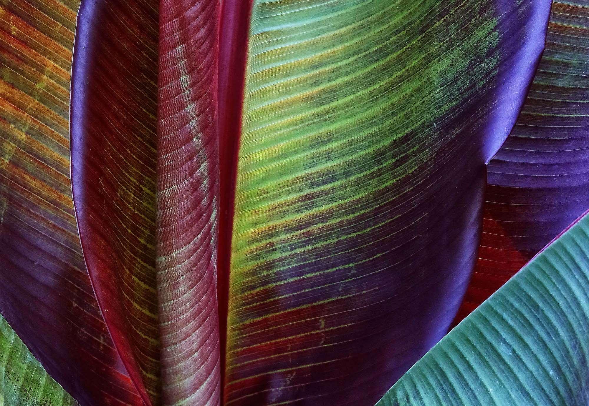 Fali poszter színes banánlevél mintával trópusi hangulatban
