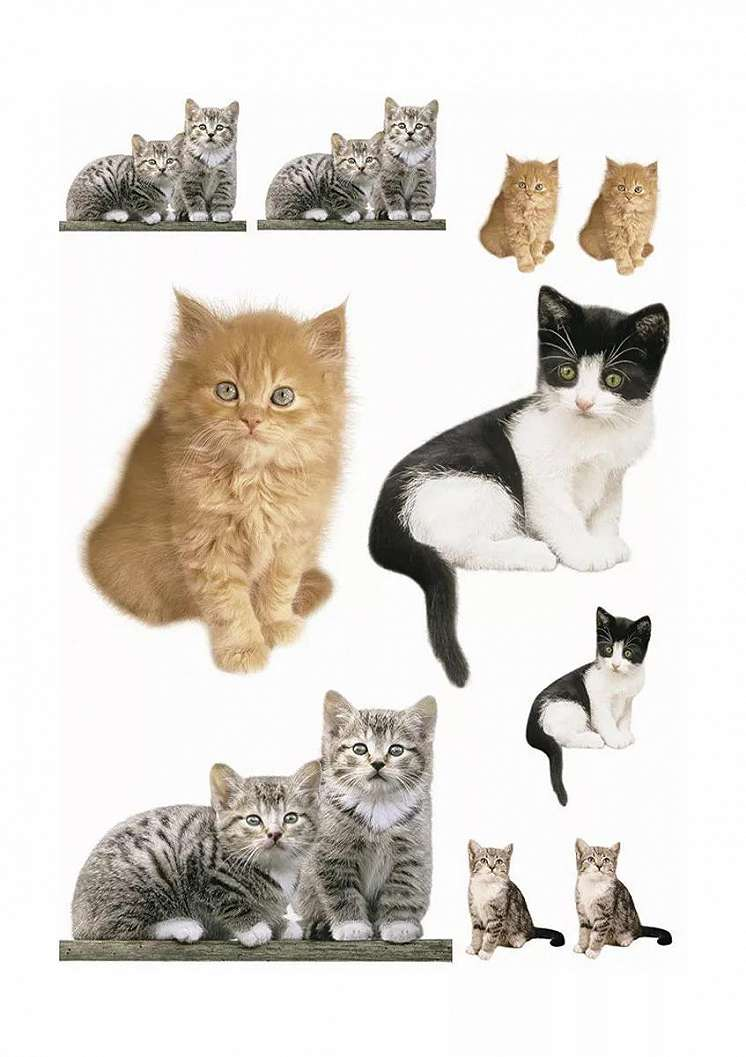 Falmatrica kedves cica mintákkal