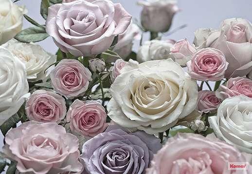 Fehér rózsák poszter