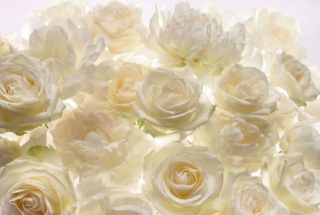 Fehér rózsaszirom fali poszter