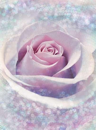 Finom rózsamintás fali poszter