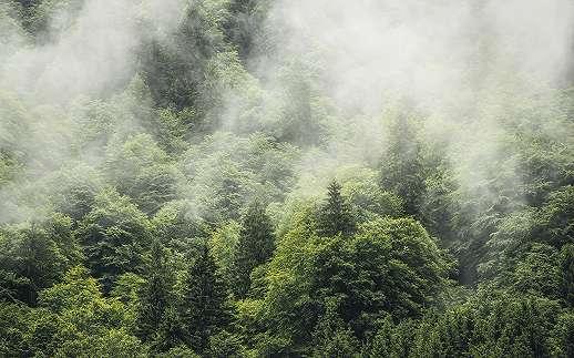 Francia Haute-Savoie erdő fali poszter