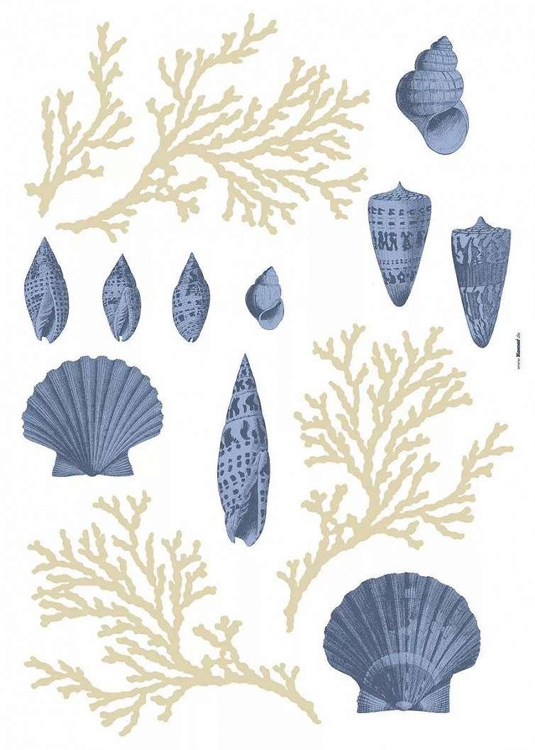 Kagyló és korall mintás falmatrica