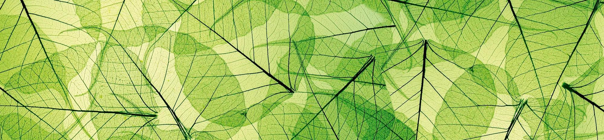 Konyhai öntapadós fólia zöld levél mintával