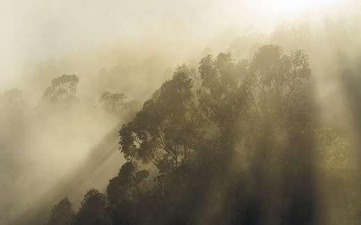 Napfelkelte az esőerdőben fali poszter