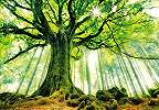 Nyugtató erdei hangulat fali poszter