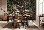 Olíva fa, mediterrán hangulat
