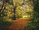 Őszi hangulatú erdő fali poszter