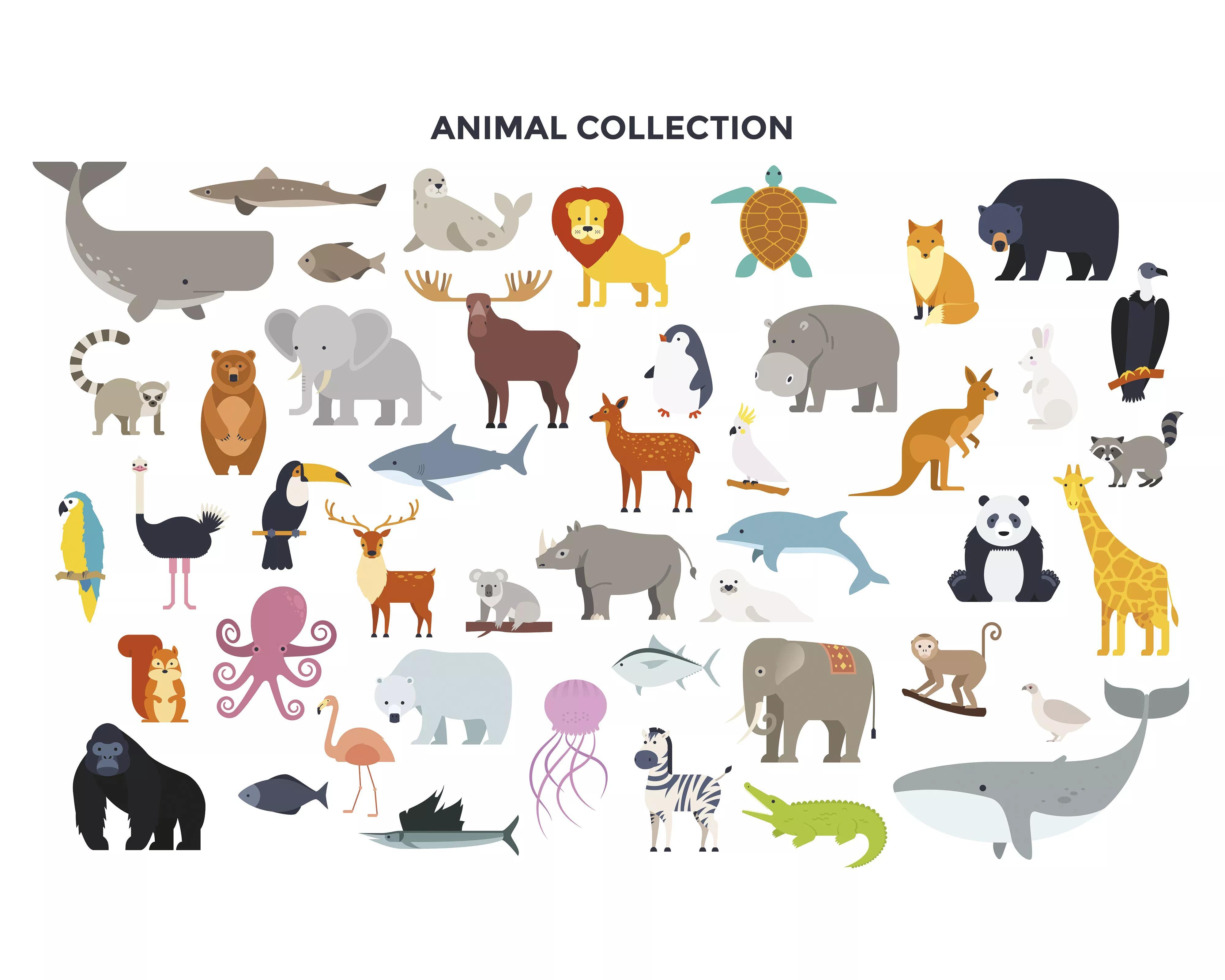 Rajzolt állat mintás vlies fali poszter gyerekszobába