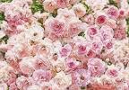 Romantikus rózsás fali poszter