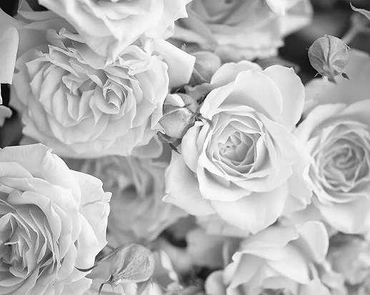 Rózsa mintás vlies fali poszter fekete fehér színvilágban