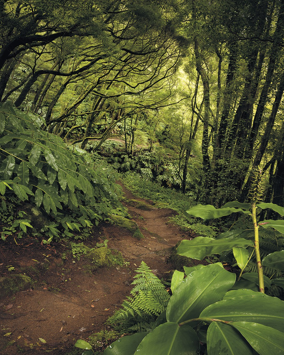 Sao Miguel dzsungel fali poszter