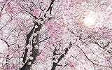 Tavasz a levegőben fali poszter