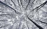 Téli erdő szépsége fali poszter