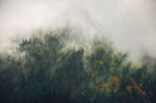 Titokzatos erdő a Kárpátokban fali poszter