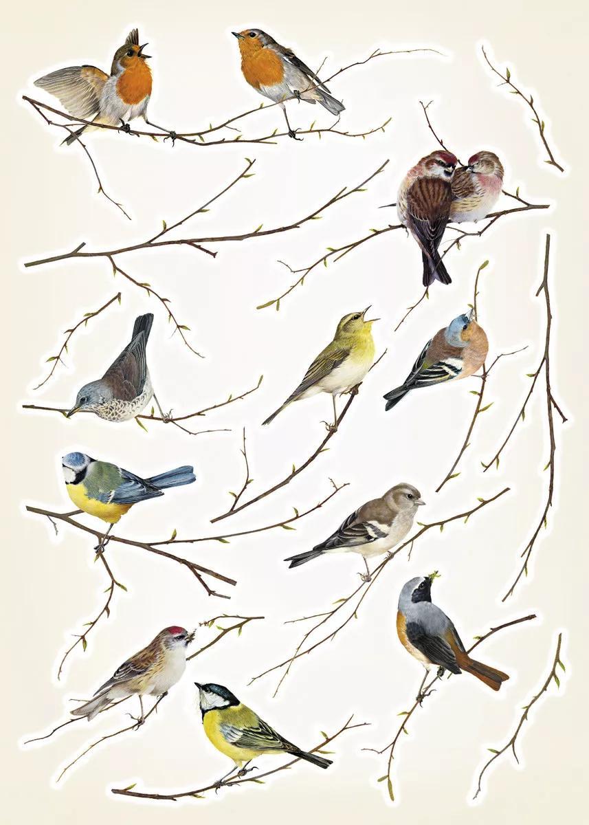 Vintage madár mintás falmatrica